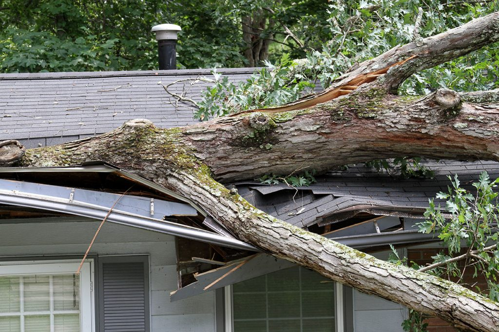 Fallen trees can cause severe damage to your home