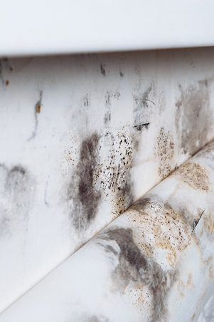 Peeling wallpaper with mold due to water damage